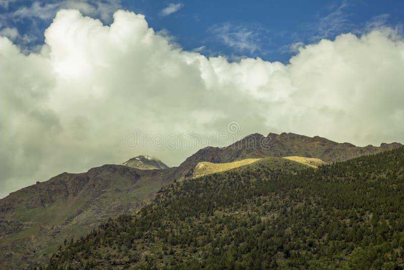 En sällsynt skog på bergssida- och snömaximumet arkivbilder