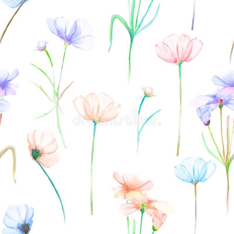 En sömlös blom- modell med vattenfärgen hand-dragit mjukt rosa och purpurfärgat kosmos blommar vektor illustrationer