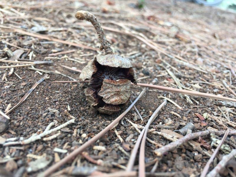 En sörjer kottar som är stupade på jordningen i skogen royaltyfria foton