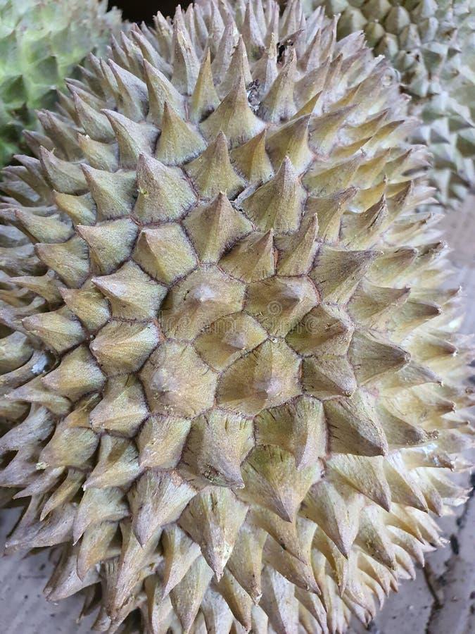 en söt och lukt av duriansk frukt från Palembang Indonesia fotografering för bildbyråer