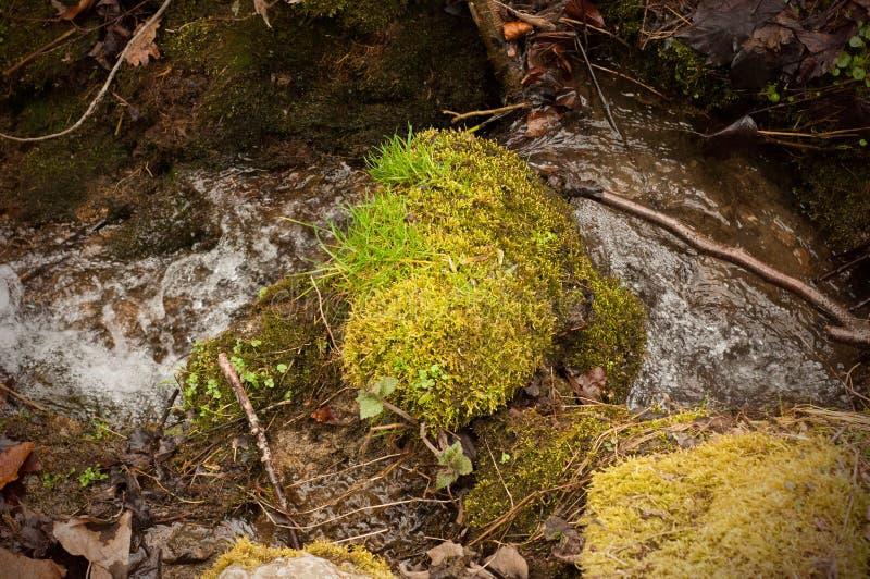 En s'?levant beau d?rangez et verdissez l'herbe pr?s ? la rivi?re, dans la for?t, en premier ressort image libre de droits