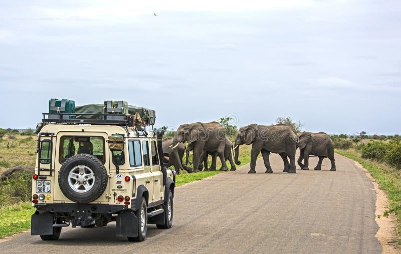 En safari en África imagenes de archivo