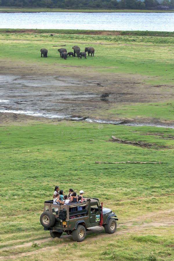 En safarijeep på den Minneriya nationalparken arkivfoton