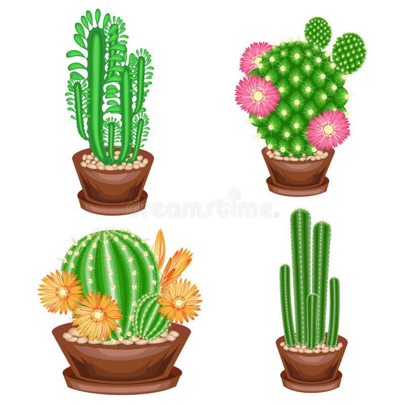 En samling av houseplants i krukor Kakturs euphorbia, Mammillaria med blommor ?lskv?rd hobby f?r samlare av kakturs Hem och famil royaltyfri illustrationer