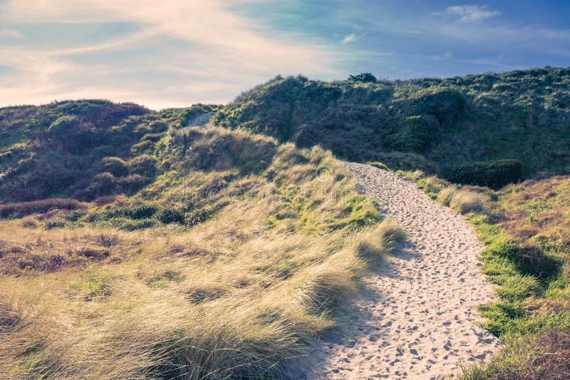 En sandig bana som leder vägen till den Wharariki stranden royaltyfri bild