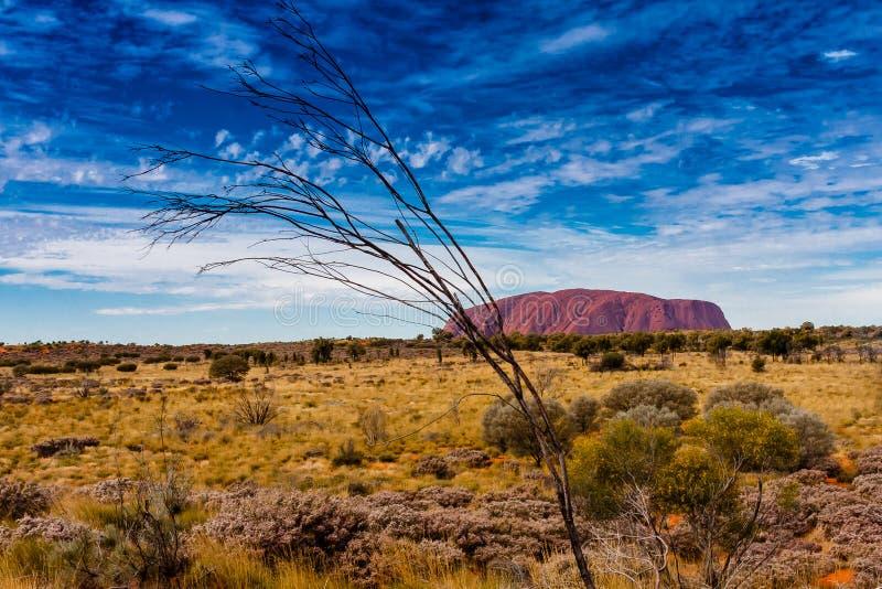 En scenisk sikt av Uluru Ayers vaggar, Australien royaltyfri fotografi
