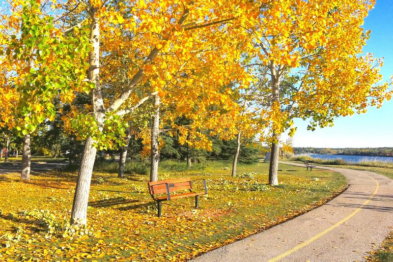 En sceniska Autumn Pathway med ljus guling och bladguld royaltyfri fotografi