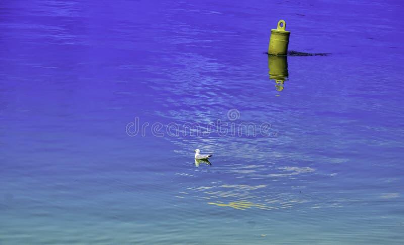 En seagull i ofantligheten arkivfoton