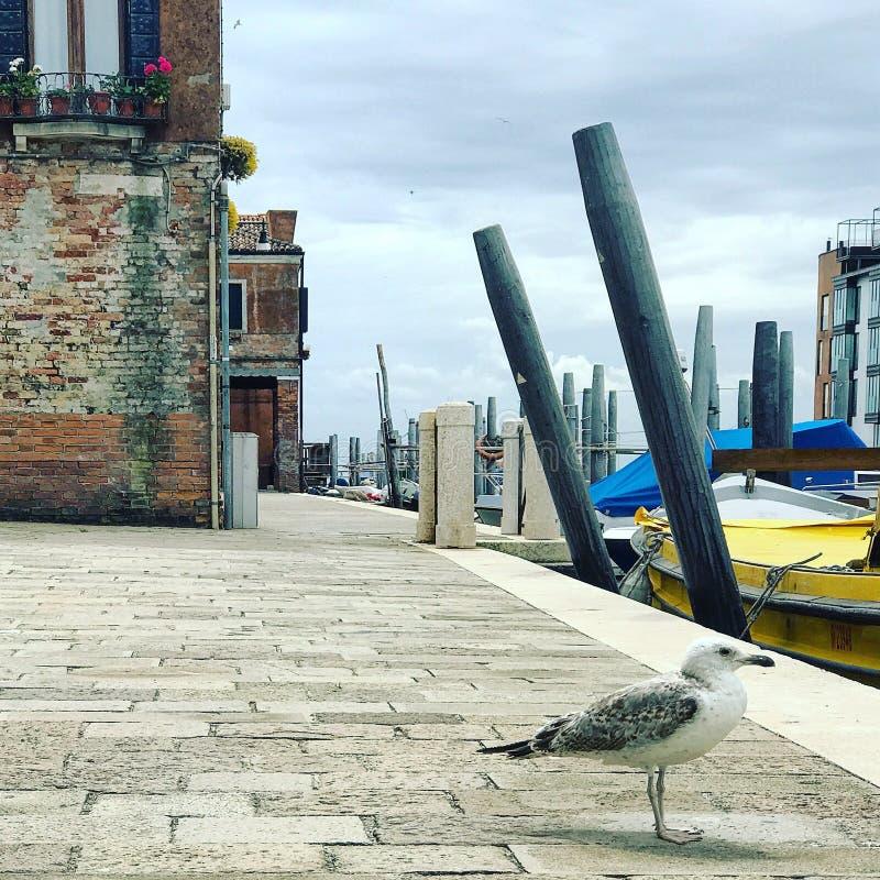 En seagull i Venedig royaltyfria bilder