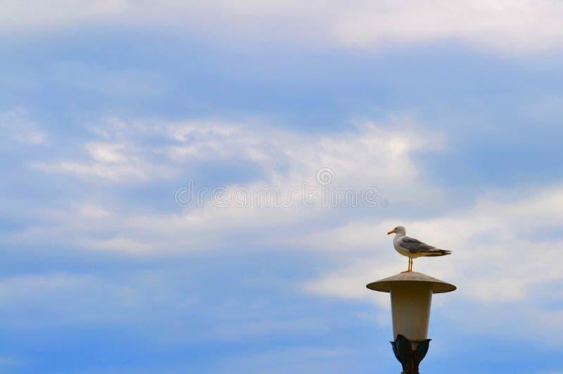 En seagull med vikta vingar står på en gatalampa royaltyfria bilder