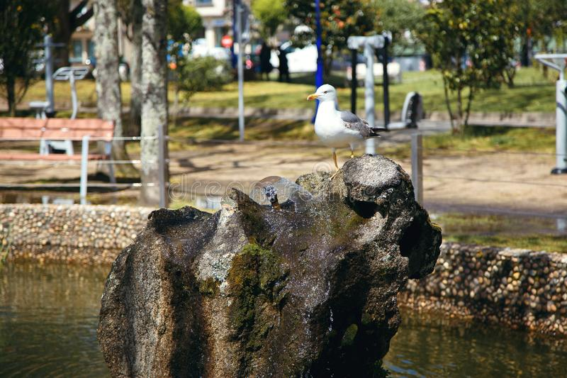 En seagull sitter på en sten i parkerar, en stillhet, härligt ställe royaltyfri foto