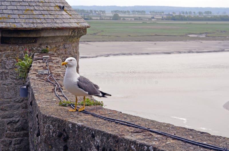 En seagull st?r p? en stenv?gg mot bakgrunden av det medeltida stenhuset av Saint Michel arkivbild