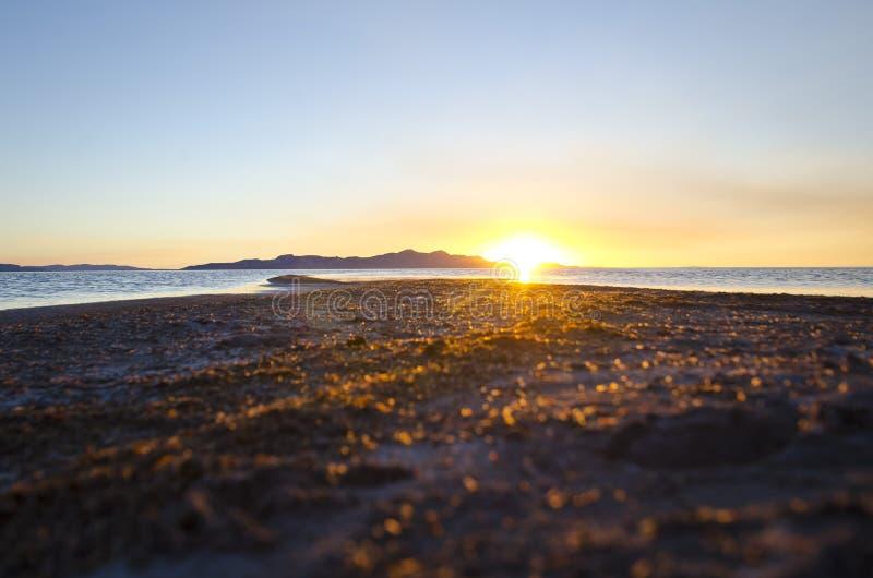 En shorelinesikt av Greatet Salt Lake royaltyfri fotografi