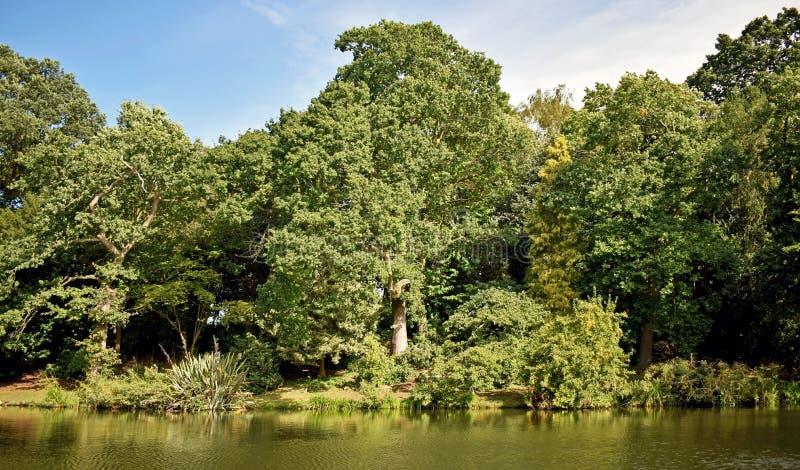 En sida av en stor sjö med trädet och buskar av olika former och format på banken royaltyfri fotografi