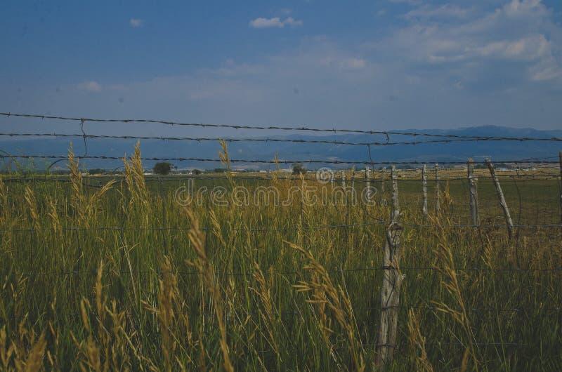 En sidosikt av lantgårdfältet under den blåa himlen royaltyfria bilder