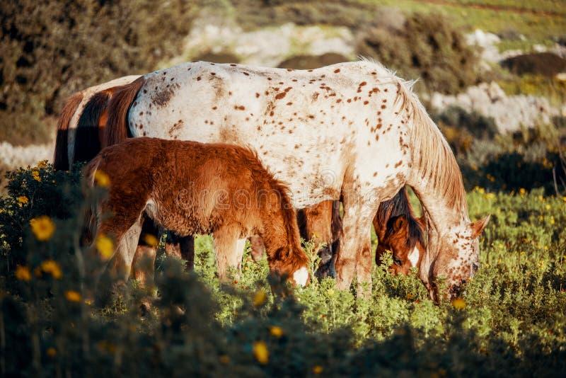 En sidostående av ett föl och en häst i ett grönt fält royaltyfri fotografi