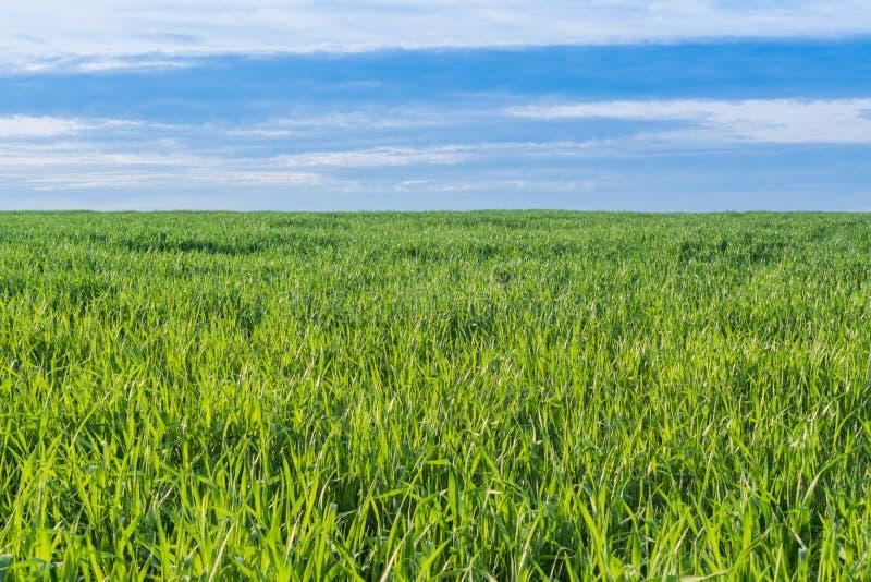 En sikt av den gröna ängen under blå himmel royaltyfri bild