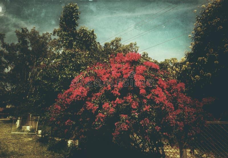 En sikt av den härliga trädgården i månskennatten med en konstnärlig blick royaltyfri fotografi