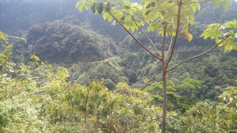 En sikt av den peruanska djungeln arkivfoton