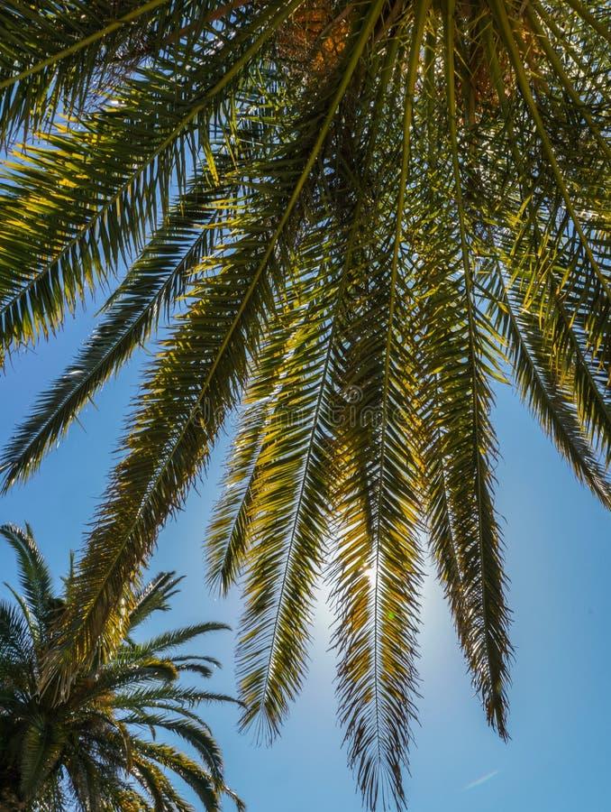 En sikt av palmträdet mot ljus blå himmel arkivbilder