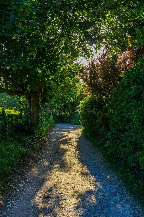 En sikt av en skuggig stenig lantlig gränd med träd längs och grön vegetation arkivfoto
