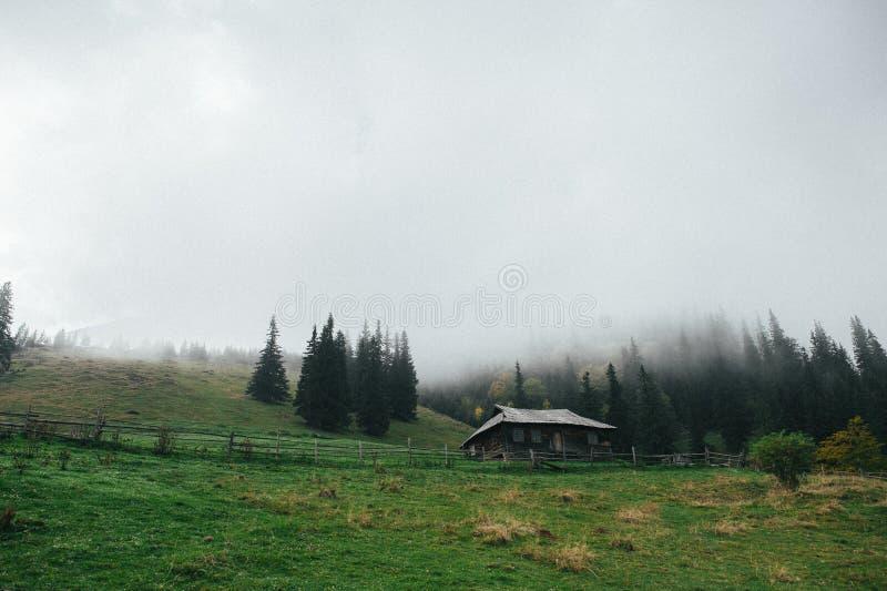 En sikt på det carpathian tallskoghuset fotografering för bildbyråer