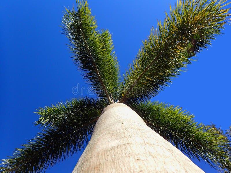 En sikt som upp ser en palmträd arkivfoto