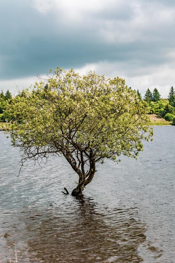 En sjö i den Dartmoor nationalparken arkivbild
