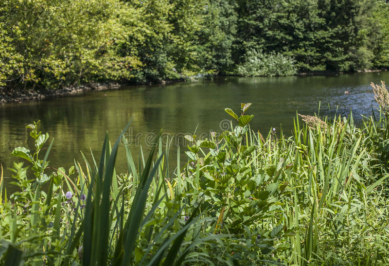 En sjö, Kew trädgårdar, London royaltyfria foton