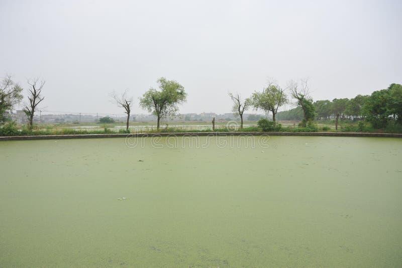 En sjö som förorenas av eutrophication royaltyfria foton