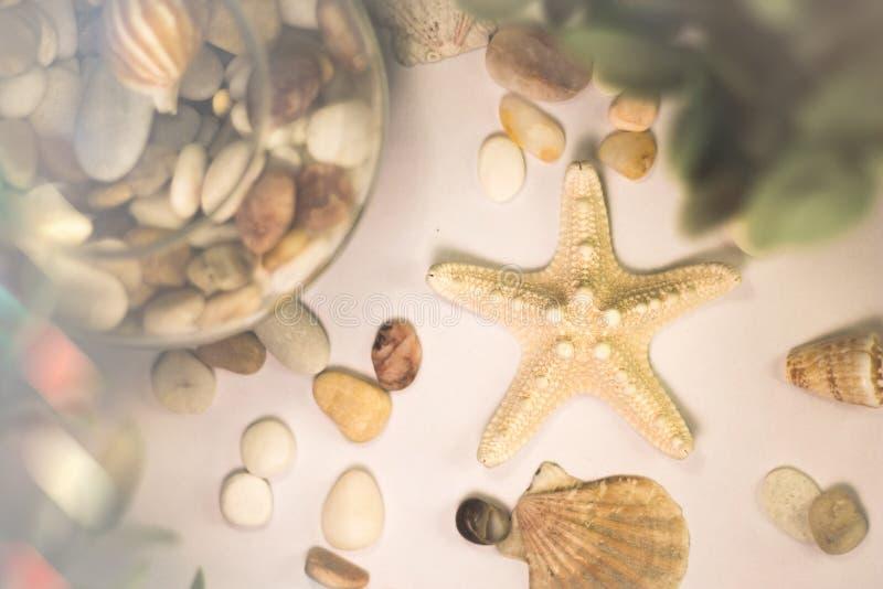 En sjöstjärna arkivbilder