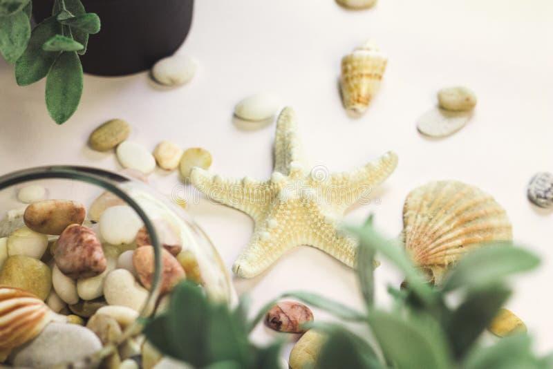 En sjöstjärna arkivfoton