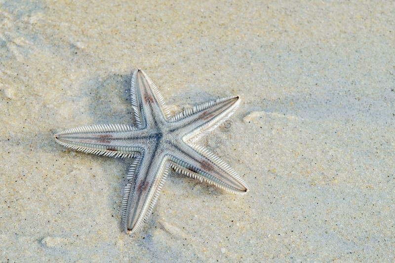 En sjöstjärna på en tropisk havsstrand royaltyfria foton