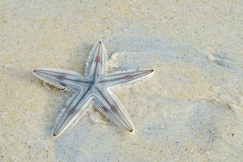 En sjöstjärna på en tropisk havsstrand royaltyfri bild