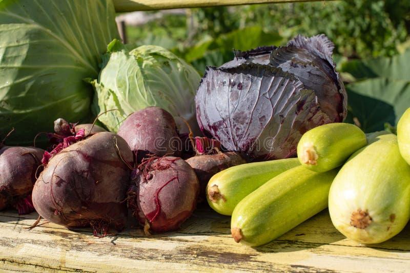 En skörd av nya grönsaker ligger på en bänk i den öppna luften arkivbild