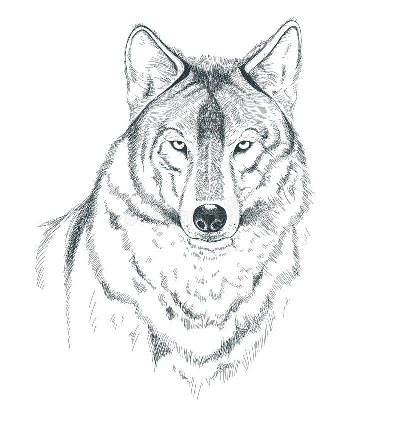 En skissa av en varg royaltyfri illustrationer