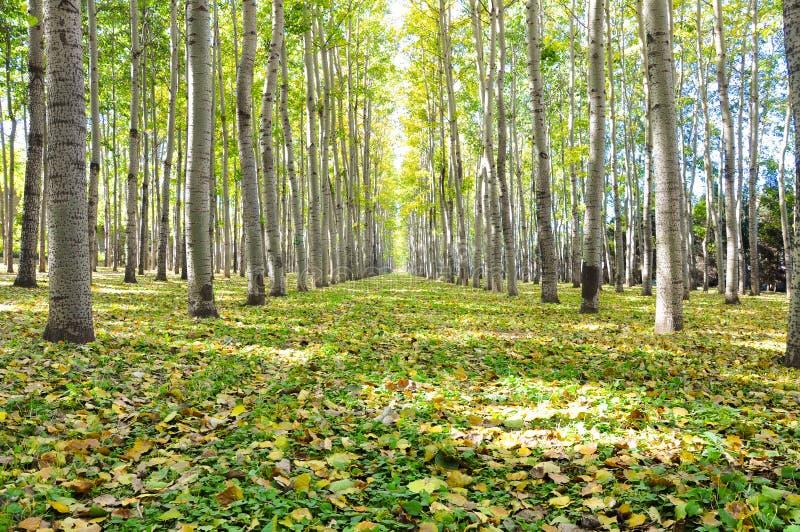 En skog fodrade banan som täcktes av stupade sidor i höst royaltyfri fotografi