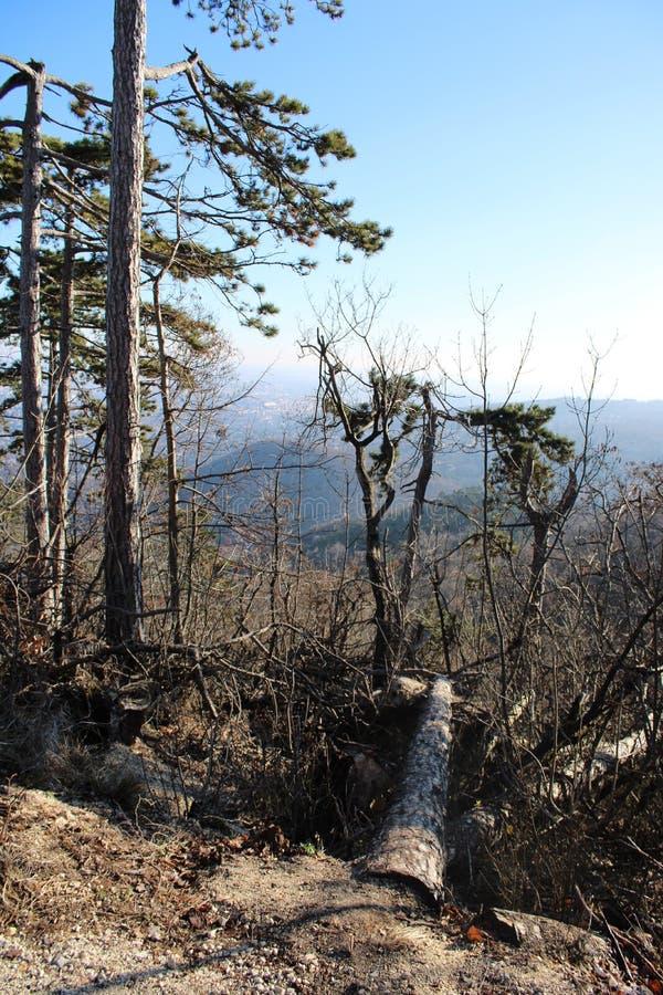 En skog i vintertid royaltyfri foto