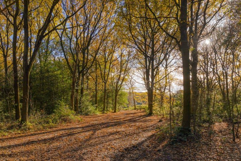 En skogsmarkbana royaltyfria foton
