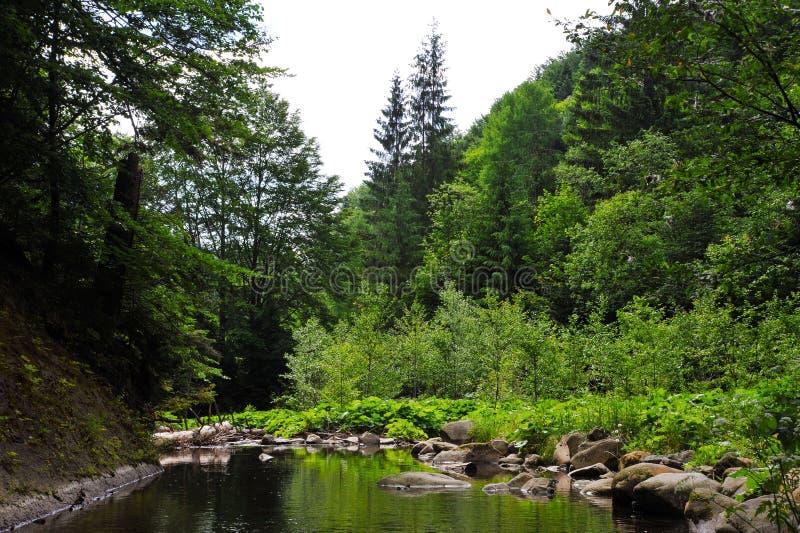 En skogström eller en sjö bland träd med stenar royaltyfri bild