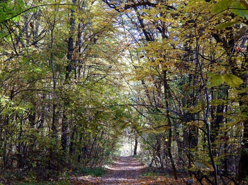En skogväg passerar till och med djungler arkivfoto