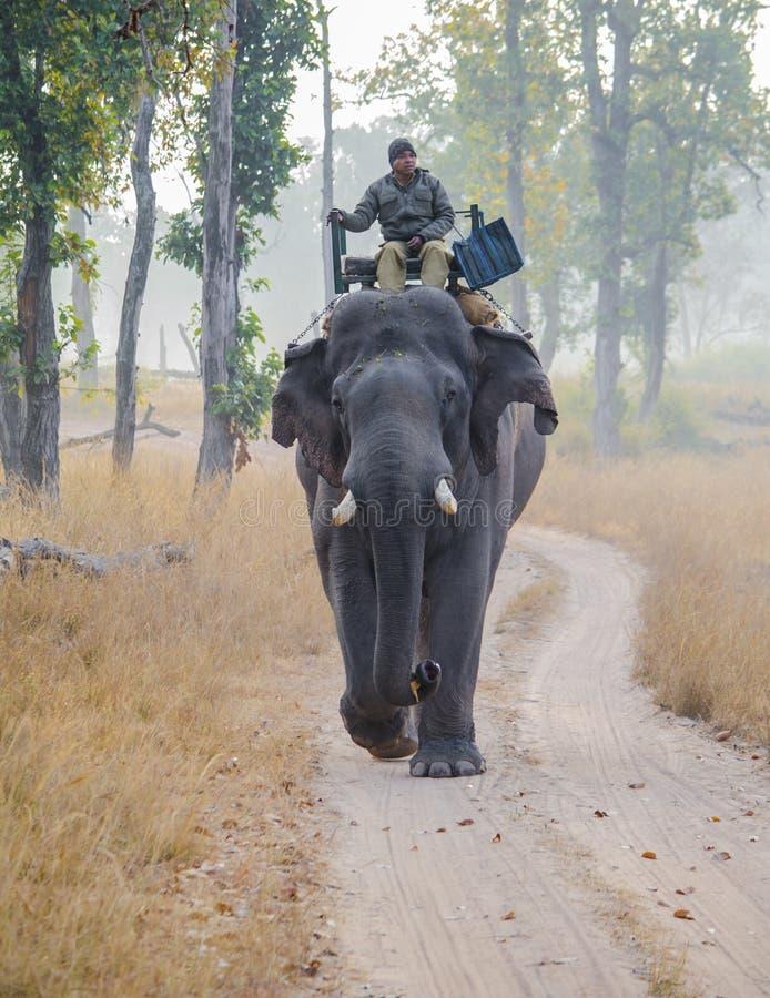 En skogvakt som patrullerar parkera på elefantbaksida arkivbild