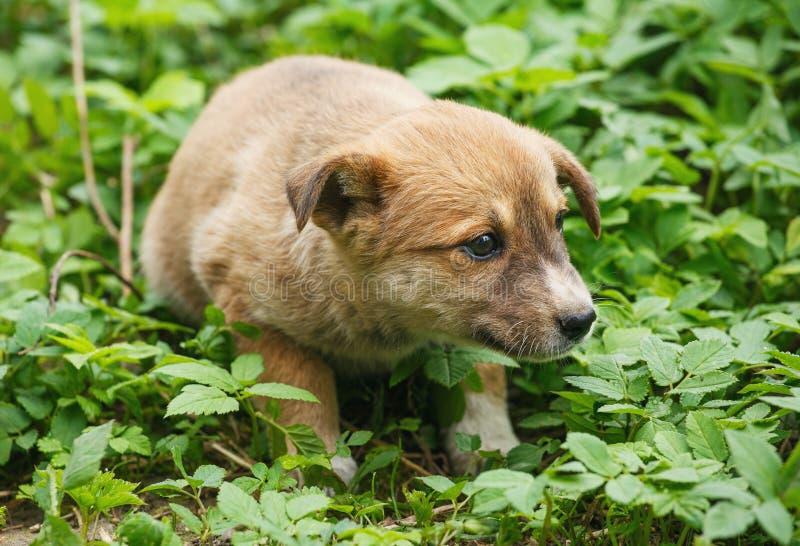 En skrämd hemlös hund på gatan arkivfoton