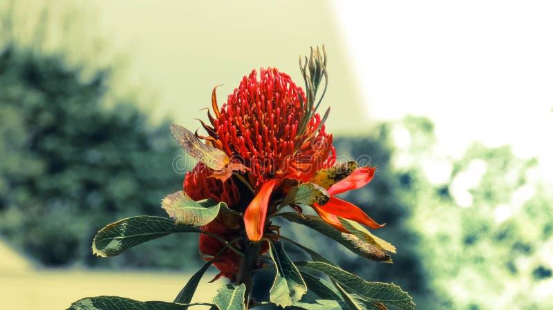 En skugga av blomningblomman arkivfoto