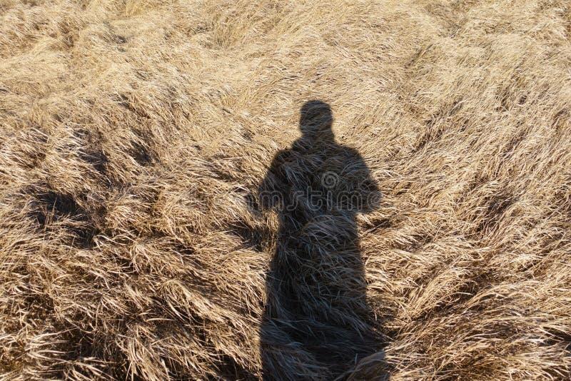 En skugga i vintergräset arkivbild