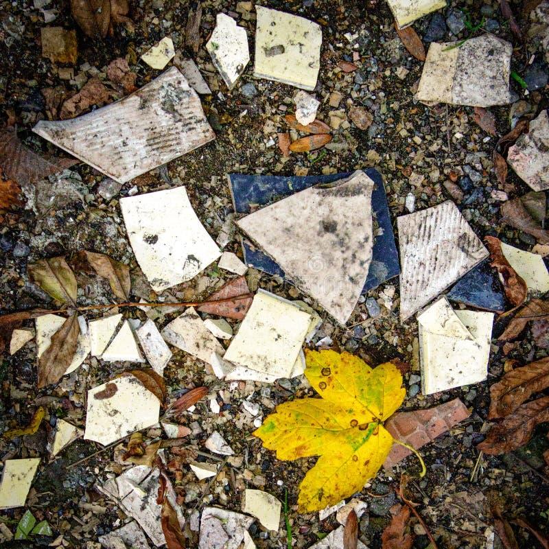 En skymt av naturen i ett kaos av förstörelse arkivbilder