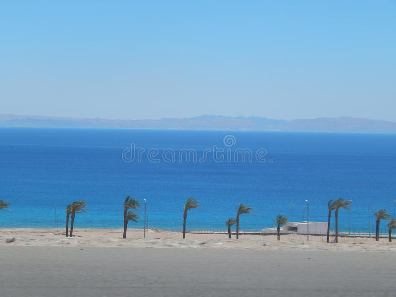 En slank rad av palmträd mot blåtten av Röda havet royaltyfri bild