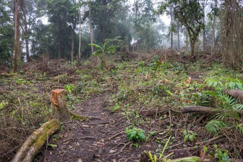 En slinga till och med tropisk rainforest till campingplatsen Raung är de mest utmanande allra Java'sens bergslingorna, är också  arkivbild