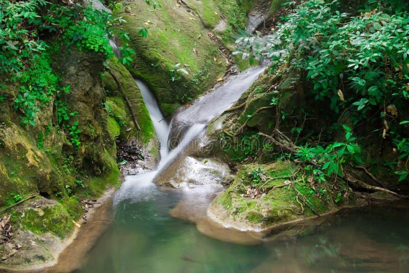 En små vattenfall och mossa och sidor på vaggar i den naturliga skogen arkivfoto