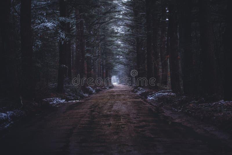 En smal lerig v?g i en m?rk skog arkivfoto
